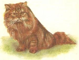 Персидская мраморная кошка