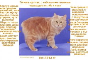 Кимрская