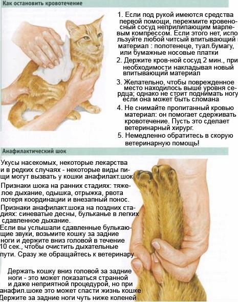 Реанимация кошек