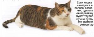 Ранение кошек