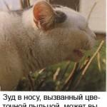 Простудные заболевания у кошек