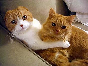 Две подружки лижут друг друга