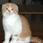 Имена кошек на букву Э
