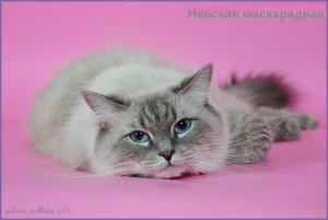 Фото невская маскарадная