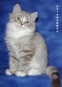 Рагамаффин фото