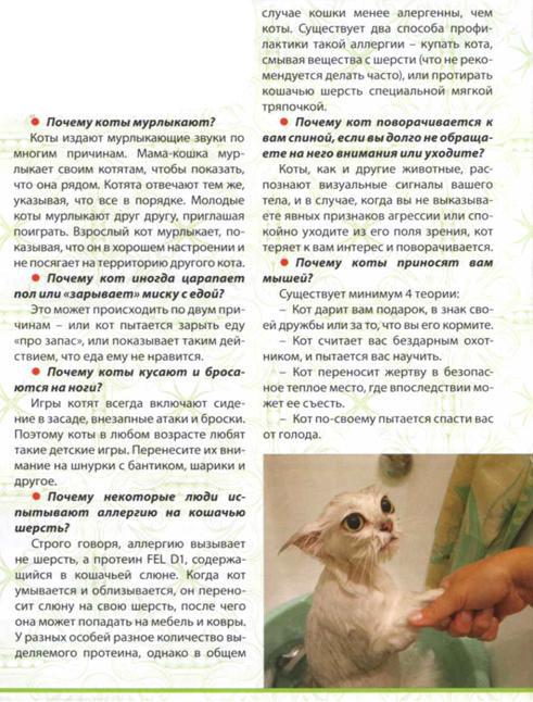 Что нужно знать о котах