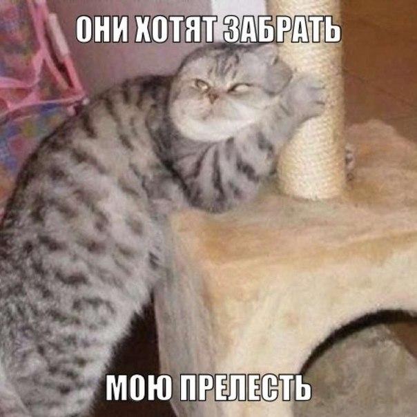 Прикольные фото кошек большая