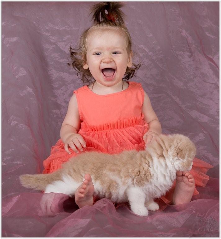 Прикольные кошки фото прикольные