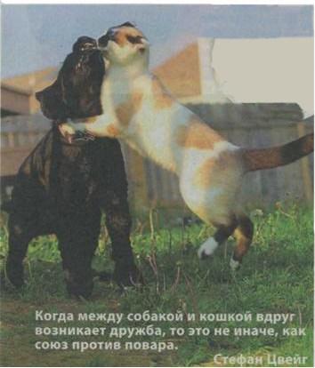 Интересные фото кошек