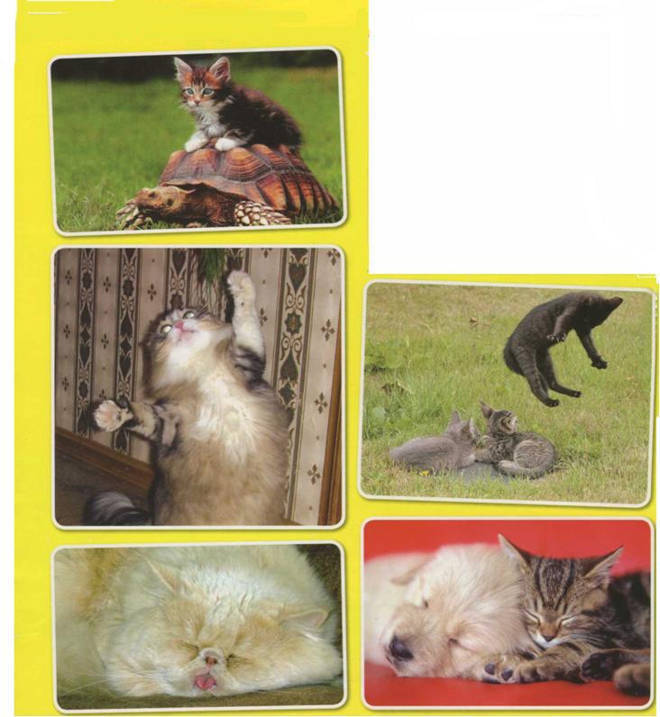 Смешные и прикольные фото кошек