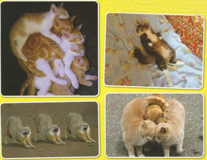 Фото кошек прикольные