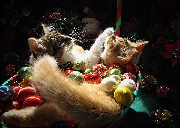Открытки с кошками