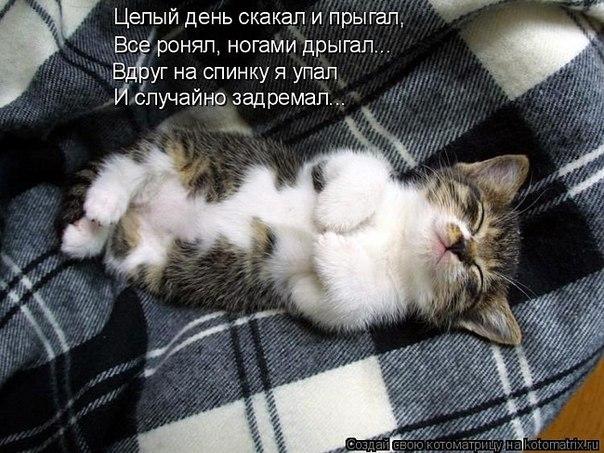 Прикольные фото кошек с надписями