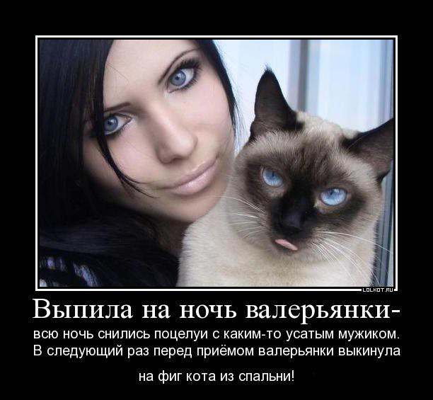 Прикольные кошки кошки
