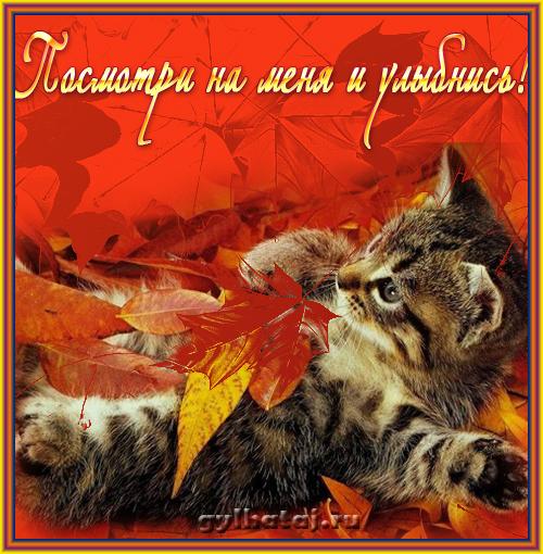 Фото замуррчательных кошек