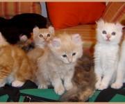 Фото замурчательных котят