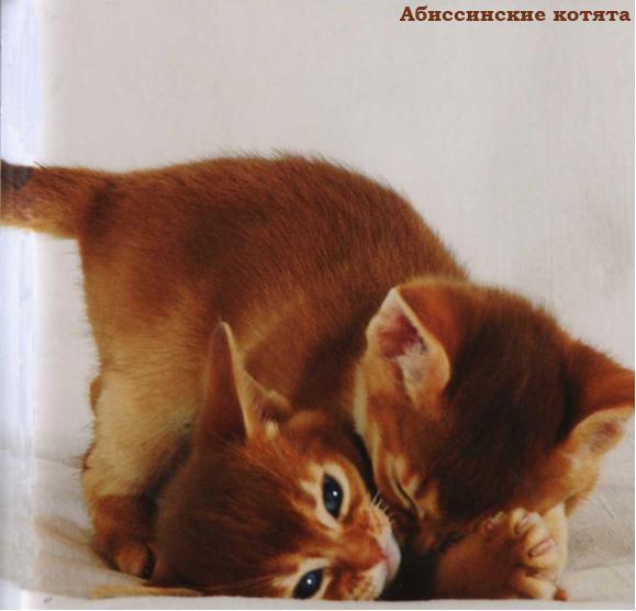 Лучшии фотографии кошек