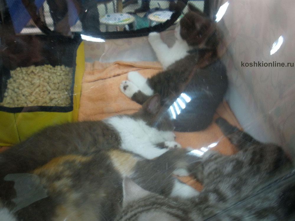 Лучшие фотографии кошек и котят