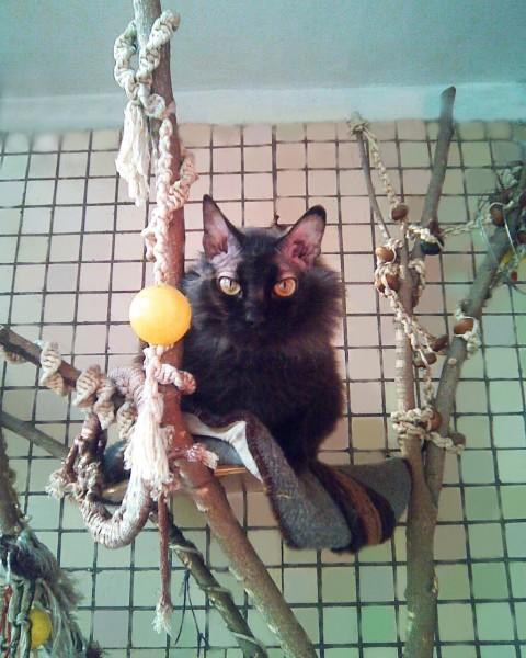 Открытки с кошками и котятами