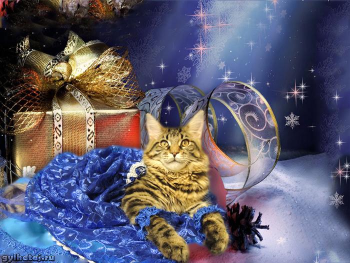 Лучшие фотографии кошек: фото мейн кун