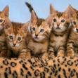 Имена кошек на букву Й