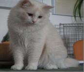 Имена кошек на букву Р