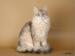 Имена кошек на букву С